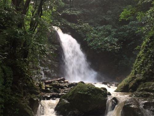 Coffee Farm, HI Yield, Waterfalls : San Ramon : Costa Rica