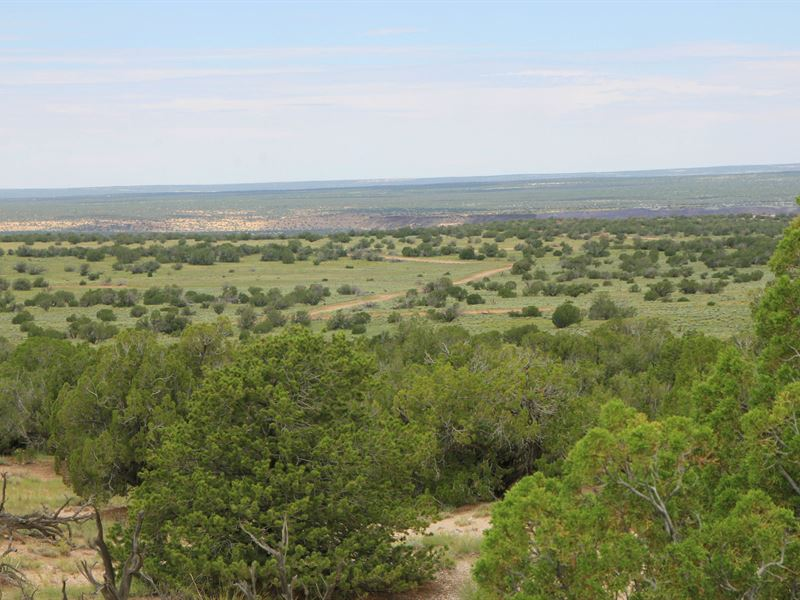Quiet Secluded Northern Az Ranch : Saint Johns : Apache County : Arizona