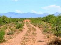 Nice Lot, Med Cannabis Approved : Sunizona : Cochise County : Arizona