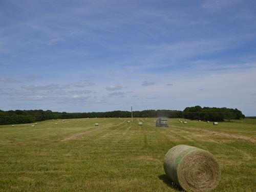 Grazing, Hay Ground, Hunting : West Plains : Howell County : Missouri