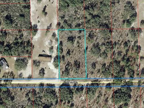1.25 Acre Lot 778532 : Bronson : Levy County : Florida