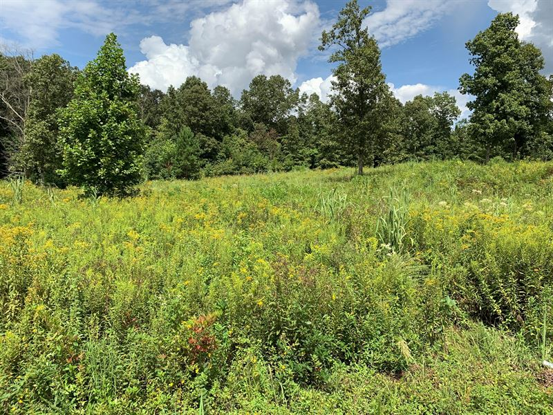 Land For Sale in Tennessee : Mount Pleasant : Lawrence County : Tennessee