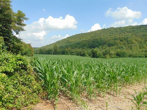 Super Location Woods, Water & View : Sparta : Alleghany County : North Carolina