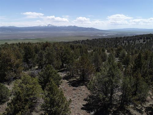 Gorgeous Treed 20 Acre Parcel : Madeline : Lassen County : California