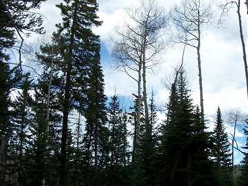 Wonderful Land To Build Your Cabin : Cimarron : Gunnison County : Colorado