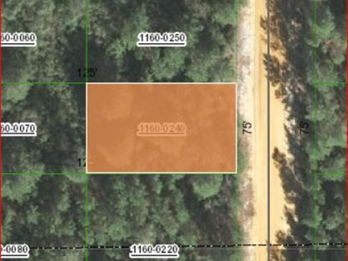 .22 Acres For Sale In Putnam County : Interlachen : Putnam County : Florida