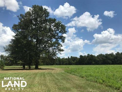 Williamsburg Mini Farm : Lake City : Williamsburg County : South Carolina