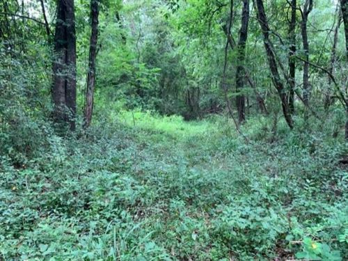 47.8 Acres In Jefferson County : Fayette : Jefferson County : Mississippi