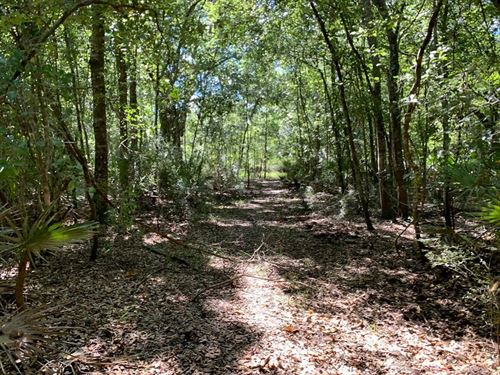 Suwannee River Waterfront Property : Bell : Gilchrist County : Florida