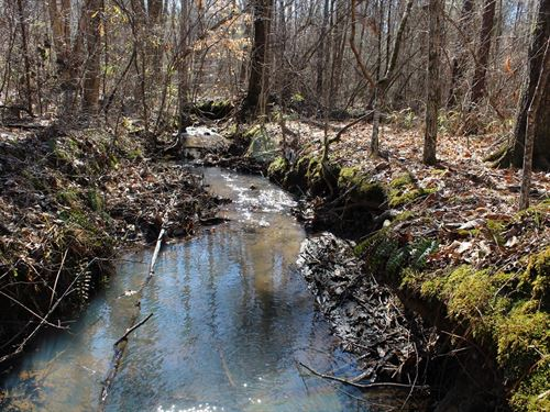 Needham Tract 160+/- Acres : Roanoke : Randolph County : Alabama