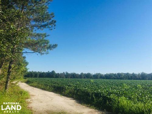 Sandy Grove Church Road 46.34 Acre : Lamar : Lee County : South Carolina