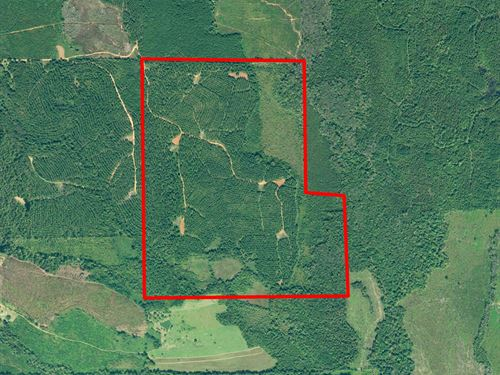 Pigeon Creek Timber Tract : Greenville : Butler County : Alabama
