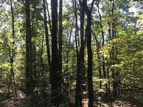 109.9+/- Acres With Mature Hardwood : Gruetli-Laager : Grundy County : Tennessee