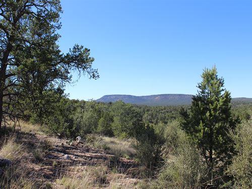 Off-Grid Seligman Hunting Land : Seligman : Yavapai County : Arizona