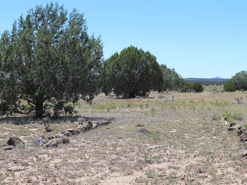 Equine Selgiman Historic Land : Seligman : Yavapai County : Arizona