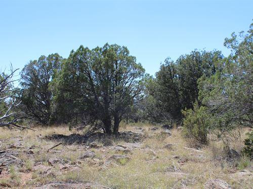Seligman Off-Grid Land : Seligman : Yavapai County : Arizona