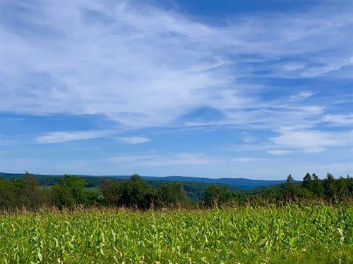 14 Acres Of Country Land : Benton : Columbia County : Pennsylvania
