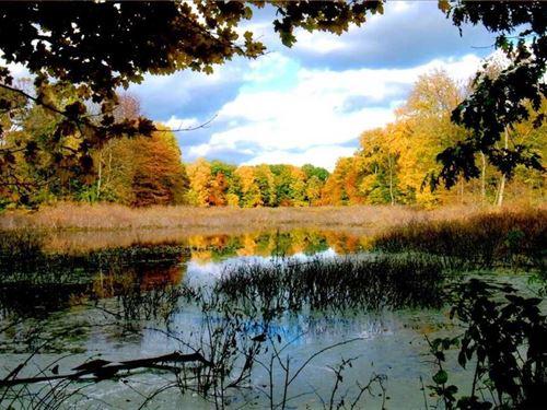 Chain Lake 69.31, Cass County : Cassopolis : Cass County : Michigan