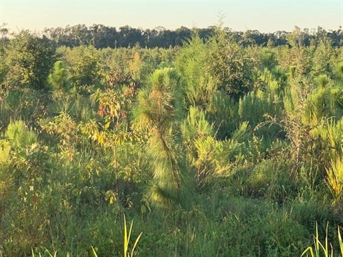 Land in Jackson County, Florida : Greenewood : Jackson County : Florida