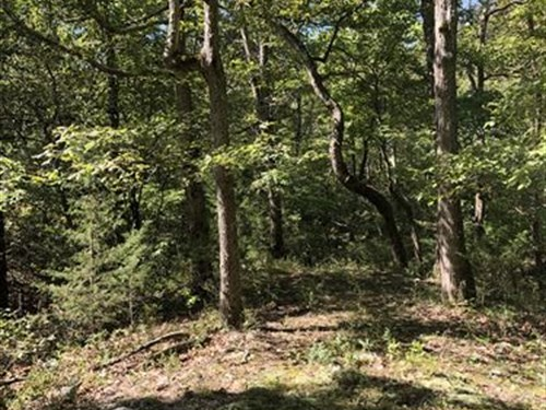 Hunting Land For Sale Southern Mo : Willow Springs : Texas County : Missouri