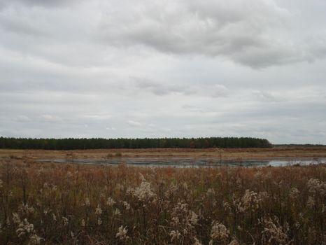 122 Acres Open land W/3Ac Pond : Hawkinsville : Pulaski County : Georgia