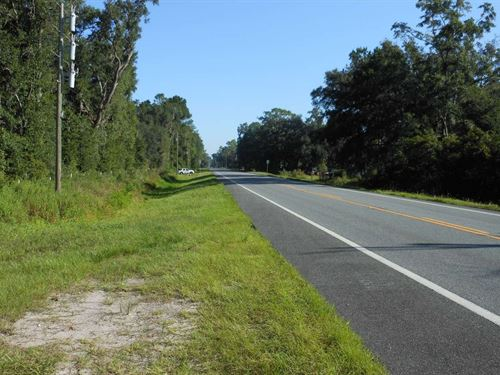 Great Piece Hunting Land Easy : Mayo : Lafayette County : Florida