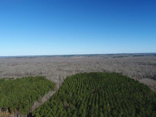 Beautiful Timberland Tract : Abbeville : Lafayette County : Mississippi