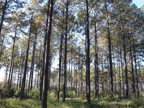 Escambia County Timberland : Atmore : Escambia County : Alabama