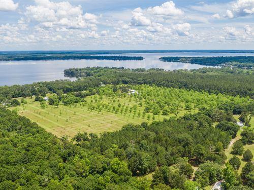 Second Generation Pecan Farm : Waldo : Alachua County : Florida