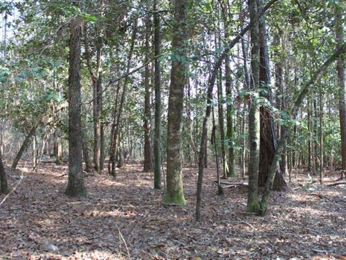 Excellent Timberland Tract : Gulfcrest : Mobile County : Alabama