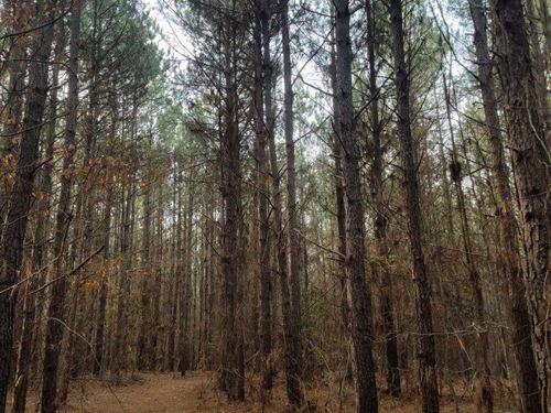 Brushy Creek Tract : Rison : Cleveland County : Arkansas