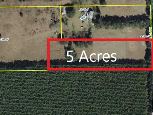 Land 5 Acres Bell, Gilchrist CO : Bell : Gilchrist County : Florida