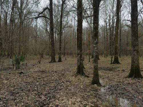 Piney Creek Tract : Monticello : Drew County : Arkansas