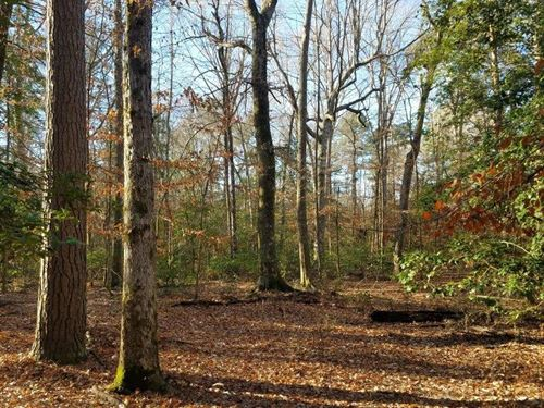 Tulip Creek Tract : Princeton : Dallas County : Arkansas