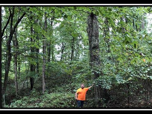 Erwin Hollow Tract 1 : Jackson : Ohio