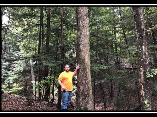 Erwin Hollow Tract 3 : Jackson : Ohio