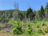 West Grave Creek : Wolf Creek : Josephine County : Oregon