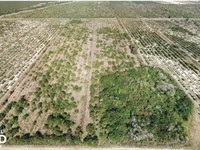 Labelle Rich Farmland Citrus Grove : Labelle : Hendry County : Florida