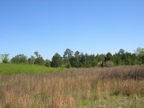 Turn Key Subdivison w/ 47 Lots : Hawkinsville : Pulaski County : Georgia