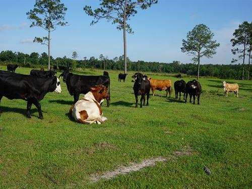 Northern Suwannee County Acreage : Live Oak : Suwannee County : Florida