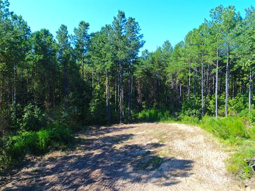Hunting & Timber Inv In Berry, Al : Berry : Fayette County : Alabama