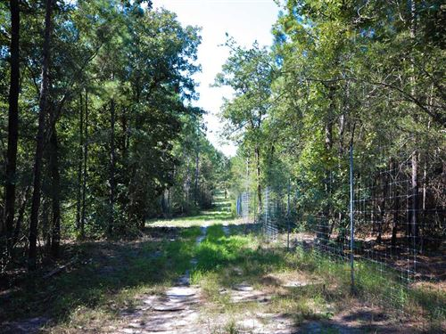 268 Acre High-Fence Recreational : Huntington : Angelina County : Texas