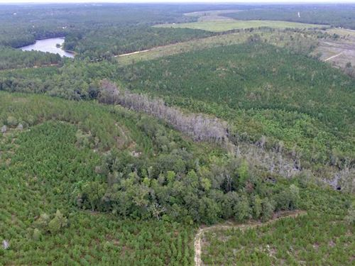 222 Acres in Aiken, Aiken County : Aiken : South Carolina