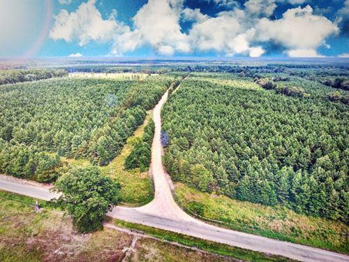 Recreational Timberland, 100 Acres : Lewisville : Lafayette County : Arkansas