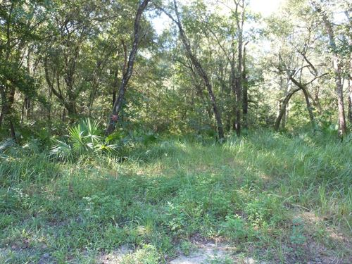 Beautifully Wooded Parcel Lots : Mayo : Lafayette County : Florida