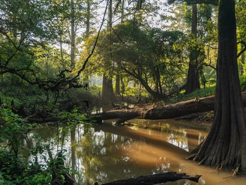 Timeless Hunting Ranch, River : Chester : Tyler County : Texas