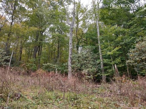 Wooded Lot in Grayson County : Independence : Grayson County : Virginia