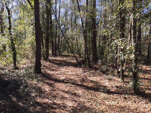 Beautiful Wooded Property : Wellborn : Suwannee County : Florida