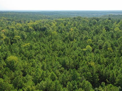 227 Acres Wooded Wildlife : Mount Carmel : McCormick County : South Carolina