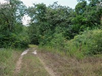 12.05 Acres Ready For Home : Rockdale : Milam County : Texas